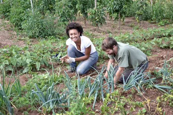 france, garden, vegetables, people